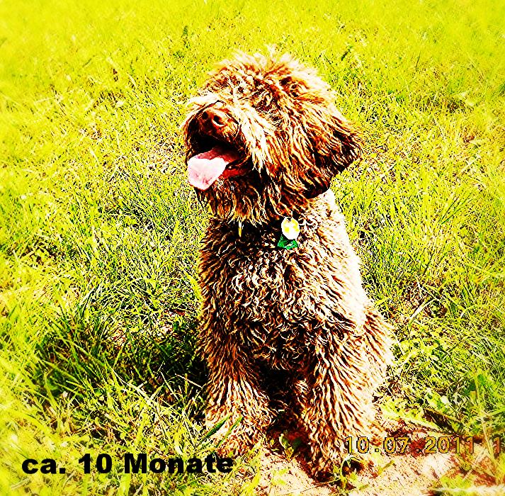 körperlichen merkmale hund