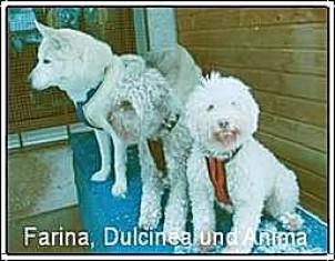 Farina, Dulcinea und Anima
